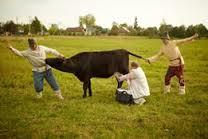Обобществление коровы. Фотография Виктора Скарновича