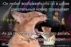 kotomatritsa_XZ