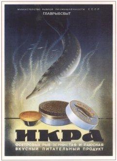 Ю. Цейров. Икра осетровых рыб. 1952